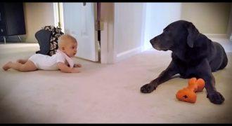 Η Μπέμπα ήταν έτοιμη να κάνει τα πρώτα της Βήματα. Η Αντίδραση του Σκύλου; Θα σας Φτιάξει τη Μέρα!