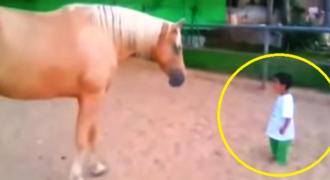 Η Μαγική Στιγμή που ένα Αγόρι με ειδικές ανάγκες πλησιάζει αυτό το Άλογο, θα σας κάνει να Δακρύσετε!