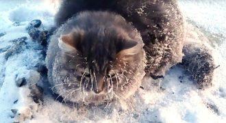 Γάτα κολλημένη σε πάγο επί ώρες διασώζεται από ένα ζευγάρι στη Ρωσία.