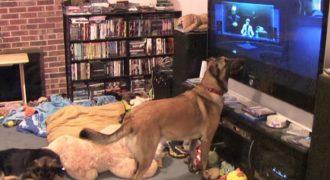 Η γυναίκα βάζει μια ταινία για να δει ο σκύλος της. Δείτε τον σκύλο όταν εμφανίζεται ο αγαπημένος του ήρωας…