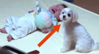 Όταν ο Μπέμπης έβαλε τα Κλάματα, το Σκυλάκι έτρεξε αμέσως στο Πλάι του. Δείτε τώρα ΠΩΣ Κατάφερε να τον κάνει να Σταματήσει να Κλαίει!