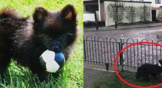 Πανέξυπνος σκύλος παίζει μπάλα με τους περαστικούς!