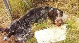 ΔΑΚΡΥΣΑΜΕ! Παράλυτος σκύλος βρίσκει τη δύναμη να κουνήσει την ουρά του όταν τον σώζουν!