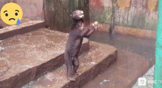 ΦΡΙΚΗ: Βίντεο-Ντοκουμέντο που Δείχνει Αρκούδες να Ζητιανεύουν για Φαγητό μέσα σε Ζωολογικό Κήπο έχει ΣΟΚΑΡΕΙ τον Πλανήτη!