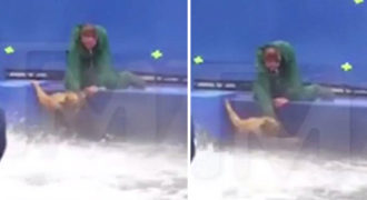 Βούτηξαν με το ζόρι σκύλο μέσα σε πισίνα για την ανάγκη γυρισμάτων στο Χόλιγουντ.