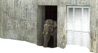 Πήγε να δει τα ζώα εάν είναι καλά στο ζωολογικό κήπο και συνάντησε κάτι ξεκαρδιστικό