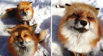 Το χωριό των αλεπούδων στην Ιαπωνία είναι το πιο χνουδωτό μέρος της Γης
