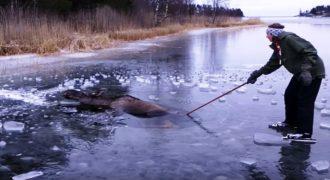 Έκανε Πατινάζ σε μία Παγωμένη Λίμνη όταν είδε ένα Τεράστιο Πλάσμα να πνίγεται. Τώρα πια είναι ένας Ήρωας! (Βίντεο)