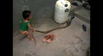 Μωρό πέρασε την κόμπρα για παιχνίδι κι άρχισε να παίζει μαζί του!