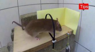 Οι καλύτερες Σπιτικές παγίδες για ποντικούς που έχουν γίνει ποτέ από καθημερινά αντικείμενα του σπιτιού μας!! (Βίντεο)