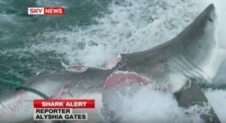 Τρομερό: Αυτό το πλάσμα δάγκωσε και έκοψε στα δύο λευκό καρχαρία – Μόλις δείτε τι ήταν δεν θα το πιστεύετε!