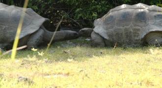 Αυτό συμβαίνει αν διακόψεις δυο χελώνες που ζευγαρώνουν! Δείτε τι έπαθε αυτός ο τύπος…!