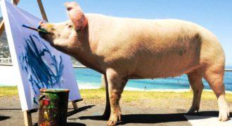 Γουρούνι που σώθηκε από τη σφαγή… έγινε καλλιτέχνης! (Βίντεο)