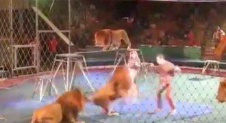 Όλα πήγαιναν καλά μέχρι που το λιοντάρι αριστερά θόλωσε. ΣΟΚΑΡΙΣΜΕΝΟΣ ο κόσμος έτρεχε να σωθεί