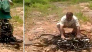 Άνδρας απελευθερώνει χιλιάδες κόμπρες, ποντίκια και φίδια σε δάσος (vid)