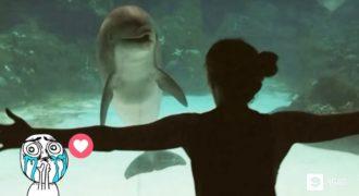 Πείραζε ένα Δελφίνι, πίσω από το προστατευτικό γυαλί. Η αντίδραση του δελφινιού; Θα σας αφήσει με το στόμα ανοιχτό!
