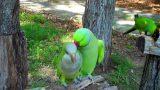 Παπαγάλος προσπαθεί να Φλερτάρει μία Θυληκιά. ΑΥΤΟ που της Ψιθύρισε στο Αυτί, θα σας κάνει να Λιώσετε! [Βίντεο]