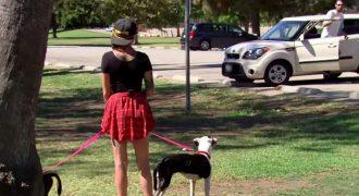 Περπατούσε στο Πάρκο όταν είδε έναν Άνδρα να βγαίνει από το Αυτοκίνητό του. Προσέξτε την Αντίδραση των Σκύλων της! (Βίντεο)