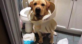 Ξεκαρδιστικές αντιδράσεις σκύλων που πιάστηκαν στα πράσα (Video)