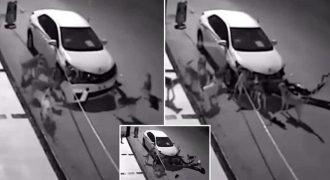 Αγέλη σκύλων διαλύει αυτοκίνητο για να βρει μία γάτα! (Βίντεο)
