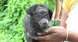 Σπάνια κατσίκα κύκλωπας γεννήθηκε στην Ινδία (Video)
