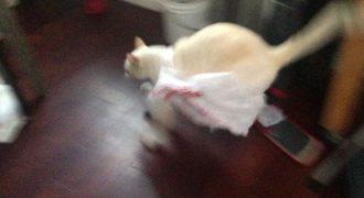 Γατούλα μετανιώνει πικρά το παιχνίδι της με μια πλαστική σακούλα