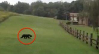 Ζευγάρι έτρεχε μακρυά από αυτό το άγριο ζώο, μέχρι που παρατήρησαν κάτι πολύ περίεργο πάνω στο κεφάλι του…