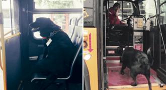 Ο Σκύλος που παίρνει μόνος του κάθε μέρα το λεωφορείο για να πάει βόλτα στο πάρκο. (Βίντεο)