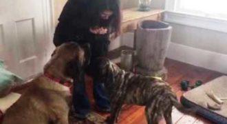 Αυτός ο σκύλος εκπαιδεύει έναν άλλο Σκύλο να… (Βίντεο)