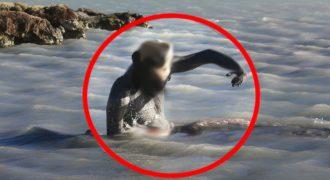 Βίντεο: 10 μυστήρια θαλάσσια πλάσματα που εμφανίζονται μόνο μετά από τσουνάμι!