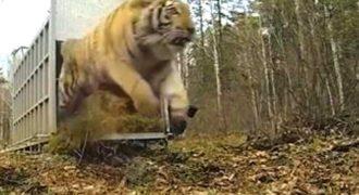 Η πρώτη επαφή των ζώων με τη φύση