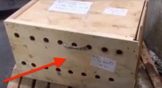 Όταν βρήκαν ΑΥΤΟ το ασυνόδευτο δέμα στο Αεροδρόμιο, φοβήθηκαν για Βόμβα. Μόλις όμως το άνοιξαν; ΠΑΓΩΣΑΝ…