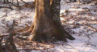Αποφάσισε να καταγράψει επί έναν χρόνο ένα δέντρο και μας παρουσιάζει όσα χάνουμε καθημερινά