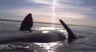 Η εντυπωσιακή στιγμή που μία φάλαινα ανεβάζει στην κοιλιά της ανθρώπους που έκαναν καγιάκ