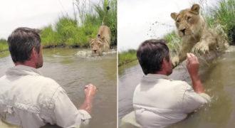 Λιονταρίνα πέφτει στην αγκαλιά του άντρα που την έσωσε όταν ήταν μωρό