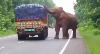 Ελέφαντας σταμάτησε φορτηγό που μετέφερε πατάτες και ξεκίνησε να τις τρώει
