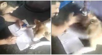 Ένας Ινδός έδειρνε τον σκύλο του επειδή δεν μπορεί να μάθει να γράφει το αλφάβητο